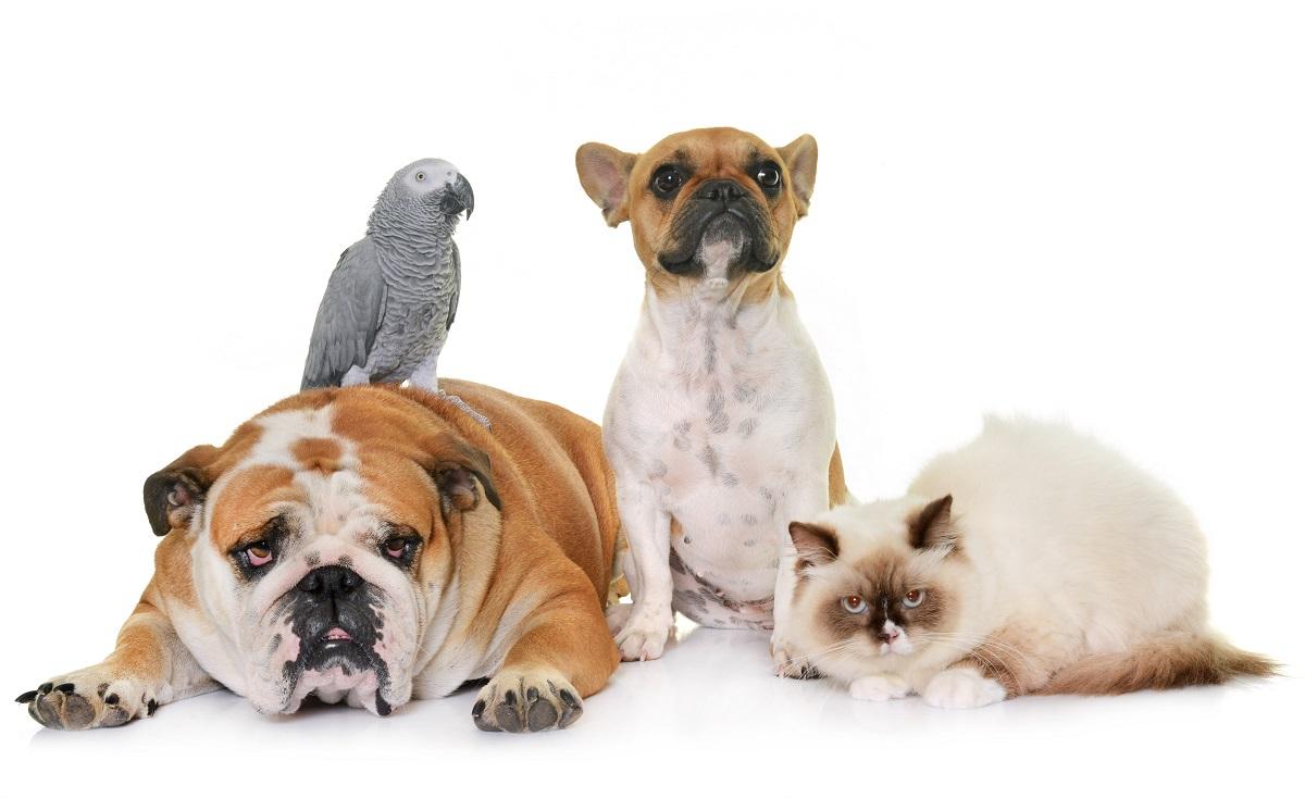 Assegurances de Gossos i Mascotes